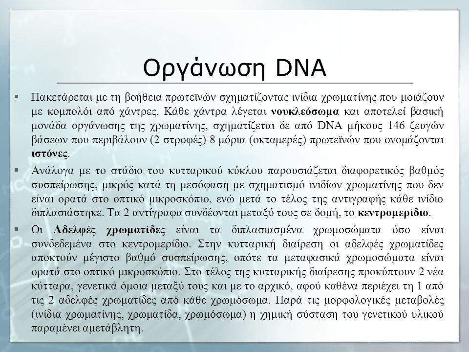 Οργάνωση DNA  Πακετάρεται με τη βοήθεια πρωτεϊνών σχηματίζοντας ινίδια χρωματίνης που μοιάζουν με κομπολόι από χάντρες. Κάθε χάντρα λέγεται νουκλεόσω