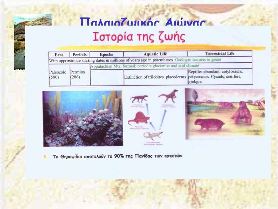 Παλαιοζωικός Αιώνας Πέρμιος 290-250 Μya Δημιουργία της Παγγαίας. Εμφανίζονται οι πρόγονοι των θηλαστικών. Τα θηλαστικά προέρχονται κατευθείαν από τα Π