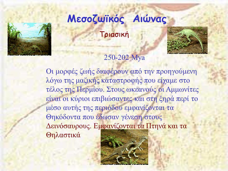 Μεσοζωϊκός Αιώνας Τριασική 250-202 Μya Οι μορφές ζωής διαφέρουν από την προηγούμενη λόγω της μαζικής καταστροφής που είχαμε στο τέλος της Περμίου. Στο