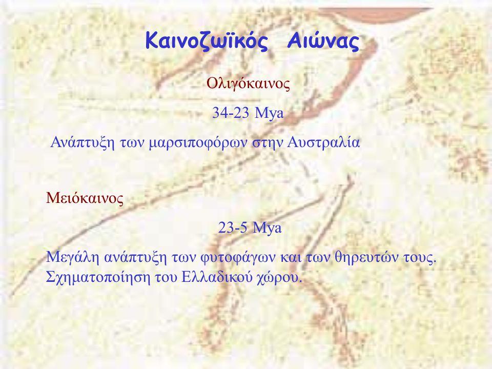 Καινοζωϊκός Αιώνας Ολιγόκαινος 34-23 Μya Ανάπτυξη των μαρσιποφόρων στην Αυστραλία Μειόκαινος 23-5 Μya Μεγάλη ανάπτυξη των φυτοφάγων και των θηρευτών τ
