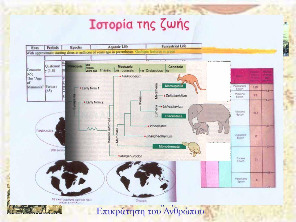 Καινοζωϊκός Αιώνας Πλειόκαινος 5-2 Μya Σχηματίζονται τα Ιμαλάϊα. Εμφάνιση των Ανθρωπίδων. Η Ν. Αμερική ενώνεται με την βόρεια στον ισθμό του Παναμά. Η