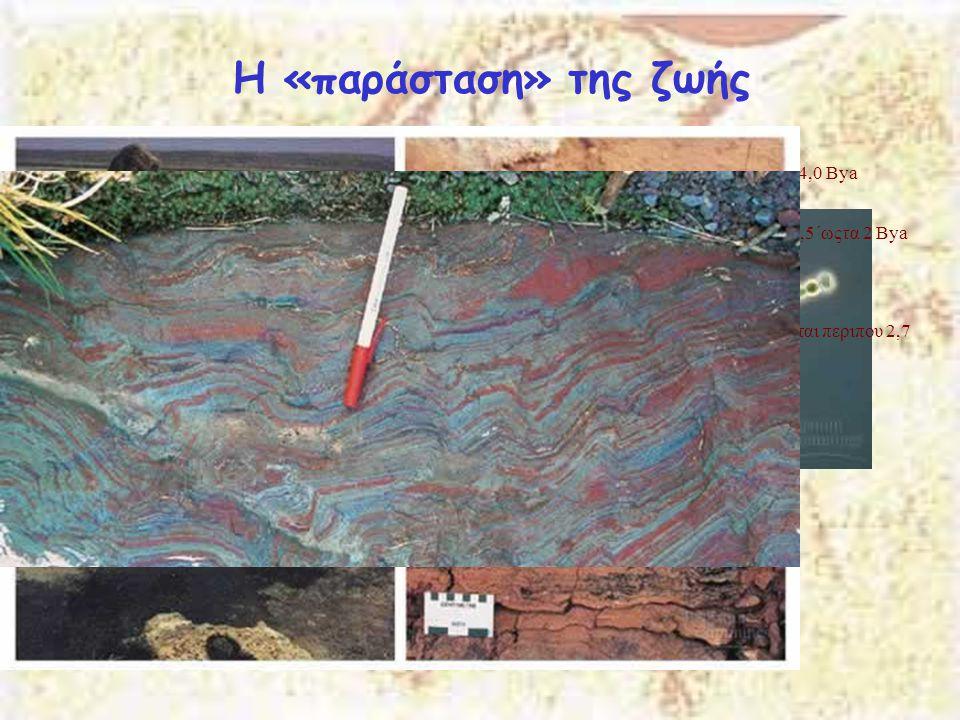 Μεσοζωϊκός Αιώνας Κρητιδική 141-65 Μya Οι δεινόσαυροι επικρατούν σε όλα τα οικοσυστήματα.