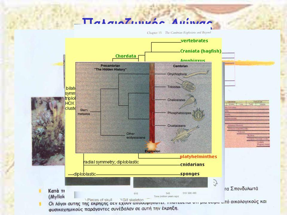 Παλαιοζωικός Αιώνας Κάμβριος 544-510 Μya Εμφανίζονται όλα τα γνωστά Φύλα
