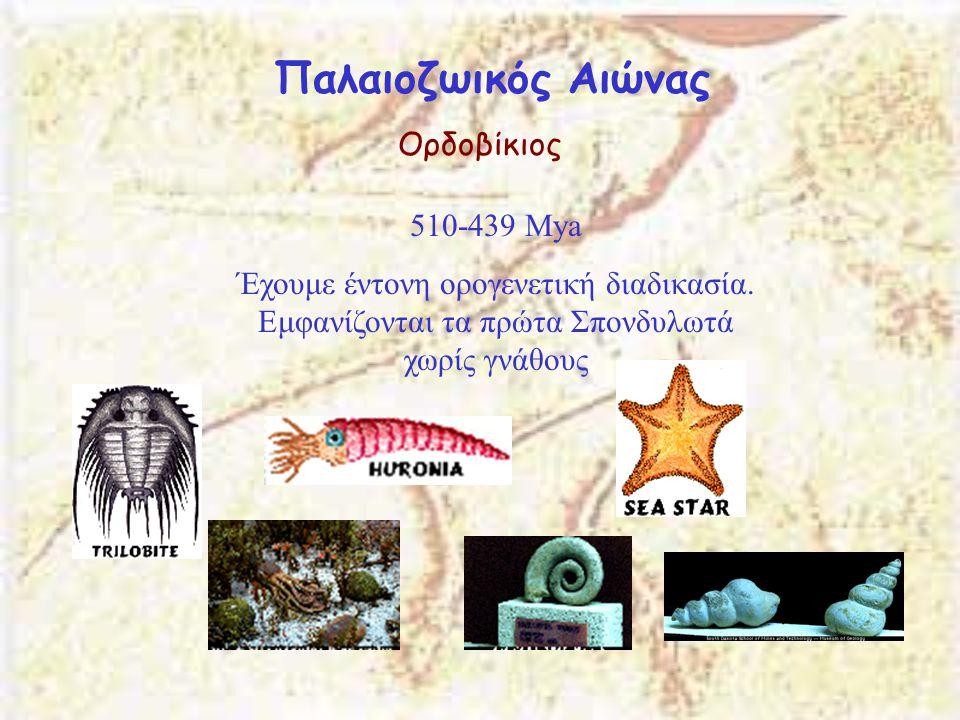 Παλαιοζωικός Αιώνας Ορδοβίκιος 510-439 Μya Έχουμε έντονη ορογενετική διαδικασία. Εμφανίζονται τα πρώτα Σπονδυλωτά χωρίς γνάθους