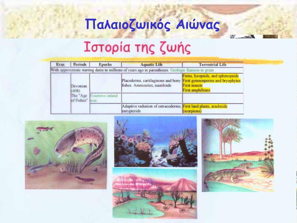 Παλαιοζωικός Αιώνας Δεβόνιος 409-363 Μya Εμφανίζονται οι πρώτοι καρχαρίες και οι πρώτοι οστεοϊχθύες. Αυτή η περίοδος αναφέρεται και ως η « εποχή των ψ