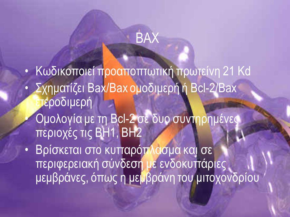 Τρόπος δράσης Μετακίνηση στο μιτοχόνδριο bax ομοδιμερή απελευθέρωση κυτοχρώματος c Apaf-1 κασπάση-9