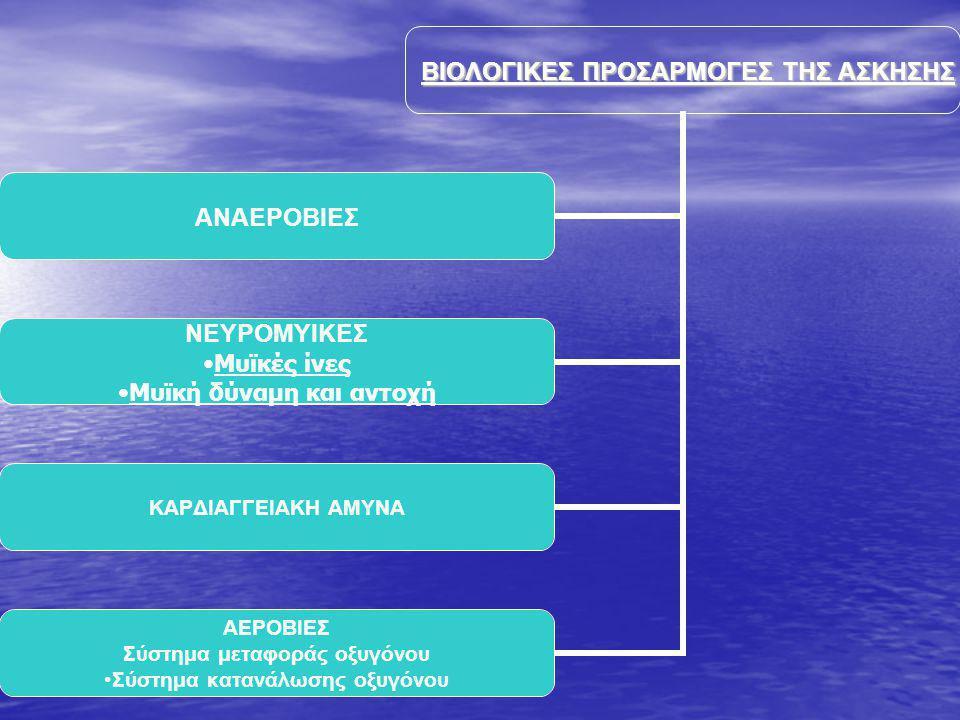 ΒΙΟΛΟΓΙΚΕΣ ΠΡΟΣΑΡΜΟΓΕΣ ΤΗΣ ΑΣΚΗΣΗΣ ΑΝΑΕΡΟΒΙΕΣ ΝΕΥΡΟΜΥΙΚΕΣ Μυϊκές ίνες Μυϊκή δύναμη και αντοχή ΚΑΡΔΙΑΓΓΕΙΑΚΗ ΑΜΥΝΑ ΑΕΡΟΒΙΕΣ Σύστημα μεταφοράς οξυγόνου