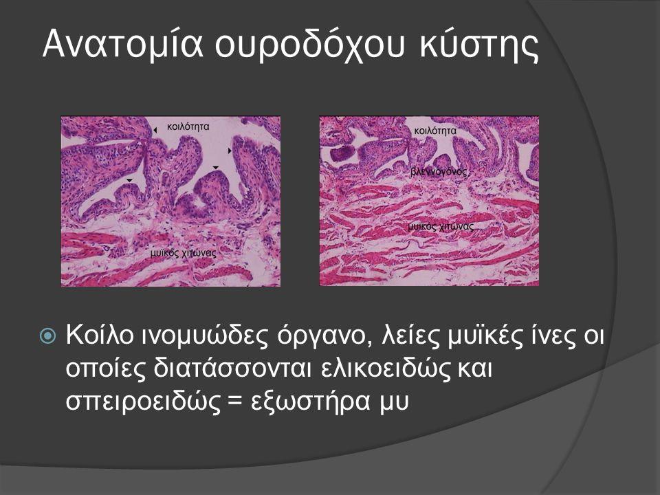 Ανατομία ουροδόχου κύστης  Κοίλο ινομυώδες όργανο, λείες μυϊκές ίνες οι οποίες διατάσσονται ελικοειδώς και σπειροειδώς = εξωστήρα μυ