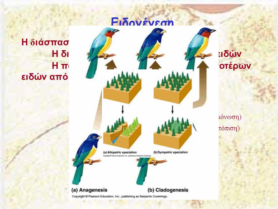 Ειδογένεση Η δ ιάσπαση μίας φυλογενετικής γραμμής Η διαδικασία πολλαπλασιασμού των ειδών Η πορεία σχηματισμού ενός ή περισσοτέρων ειδών από ένα είδος Υβριδισμός Στιγμιαία ειδογένεση (μέσω ατόμων) Γενετικά ( μεταλλαγή οδηγεί σε αναπαραγωγική απομόνωση) Κυτταρολογικά Χρωμοσωμική μετάλλαξη (π.χ.