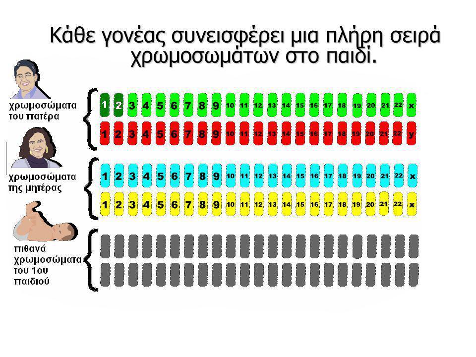 Κάθε γονέας συνεισφέρει μια πλήρη σειρά χρωμοσωμάτων στο παιδί.