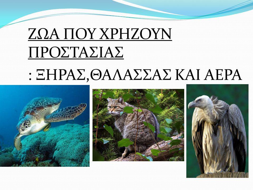 Τελική απόφαση : Μετά απο έρευνα σε πολλές ΜΚΟ και απο σχετική έρευνα στο νησί της Σύρου είδαμε οτι υπάρχουν περιστατικά με νεκρές και θανατωμένες μεσογειακές φώκιες στο νησί.Απότοκο αυτών είναι η ενασχόλιση μας με τις δράσεις που αφορούν την φώκια μονάχους-μονάχους(μεσογειακή φώκια) στα πλαίσια μιας ενημερωτικής διημερίδας.