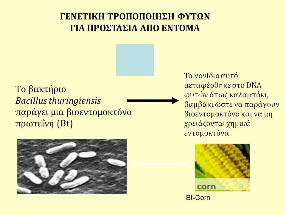 Το βακτήριο Bacillus thuringiensis παράγει μια βιοεντομοκτόνο πρωτεΐνη (Bt) ΓΕΝΕΤΙΚΗ ΤΡΟΠΟΠΟΙΗΣΗ ΦΥΤΩΝ ΓΙΑ ΠΡΟΣΤΑΣΙΑ ΑΠΟ ΕΝΤΟΜΑ Το γονίδιο αυτό μεταφέ