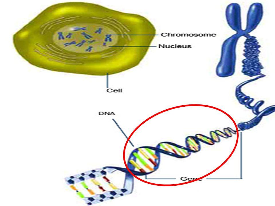 ' Ανακατεύοντας' το DNA