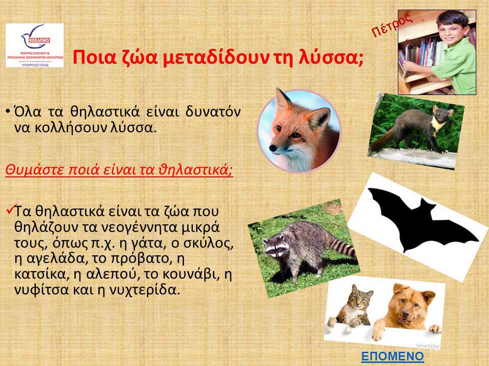 Άνθρωποι και Λύσσα Πως κολλάει κάποιος λύσσα; Η λύσσα μεταδίδεται μέσω του σάλιου, που υπάρχει στο στόμα του άρρωστου ζώου.