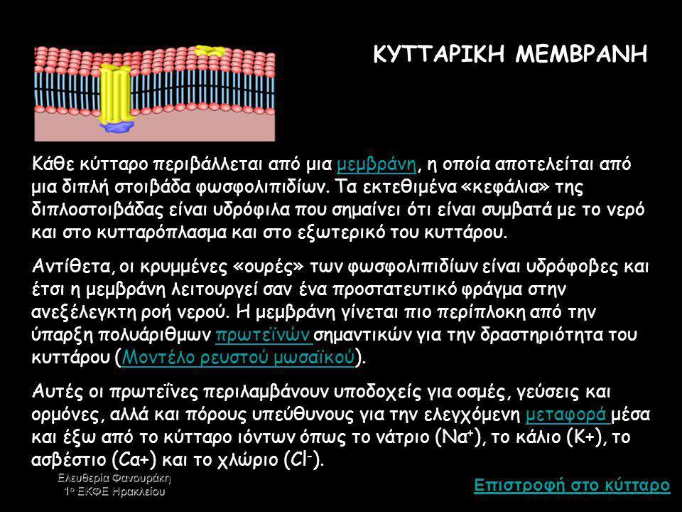 Επιστροφή στο κύτταρο Ελευθερία Φανουράκη 1 ο ΕΚΦΕ Ηρακλείου ΕΚΚΡΙΤΙΚΑ ΚΥΣΤΙΔΙΑ Οι εκκρίσεις του κυττάρου – π.χ.