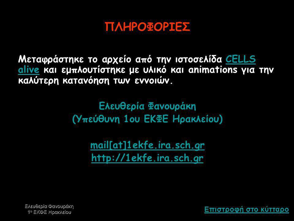 Επιστροφή στο κύτταρο Ελευθερία Φανουράκη 1 ο ΕΚΦΕ Ηρακλείου ΚΥΤΟΣΚΕΛΕΤΟΣ Ο κυτοσκελετός, όπως υπονοεί το όνομα του, βοηθάει στη διατήρηση του σχήματο