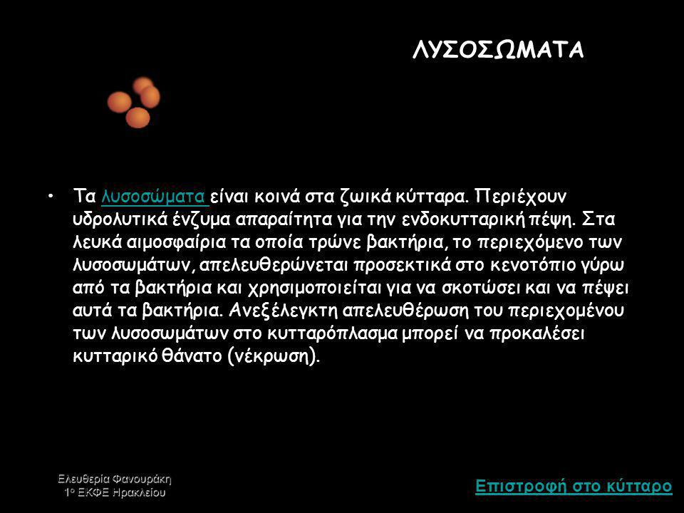 Επιστροφή στο κύτταρο Ελευθερία Φανουράκη 1 ο ΕΚΦΕ Ηρακλείου ΜΙΤΟΧΟΝΔΡΙΟ Τα μιτοχόνδρια προσφέρουν την ενέργεια που χρειάζεται ένα κύτταρο να κινηθεί, να διαιρεθεί, να παράγει εκκριτικά παράγωγα – εν συντομία, είναι τα κέντρα παραγωγής ενέργειας.μιτοχόνδρια Τα μιτοχόνδρια αποτελούνται, όπως και ο πυρήνας, από διπλή μεμβράνη.