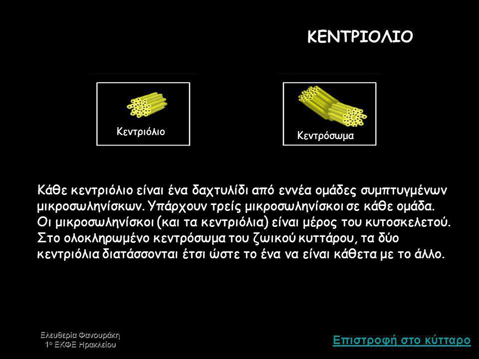 Επιστροφή στο κύτταρο Ελευθερία Φανουράκη 1 ο ΕΚΦΕ Ηρακλείου ΚΕΝΤΡΙΟΛΙΟ Κεντριόλιο Κεντρόσωμα Κάθε κεντριόλιο είναι ένα δαχτυλίδι από εννέα ομάδες συμπτυγμένων μικροσωληνίσκων.
