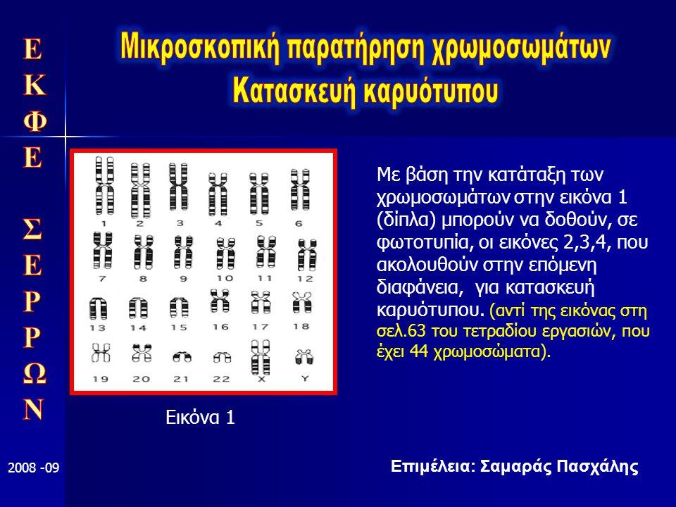 Επιμέλεια: Σαμαράς Πασχάλης 2008 -09 Εικόνα 1 Με βάση την κατάταξη των χρωμοσωμάτων στην εικόνα 1 (δίπλα) μπορούν να δοθούν, σε φωτοτυπία, οι εικόνες