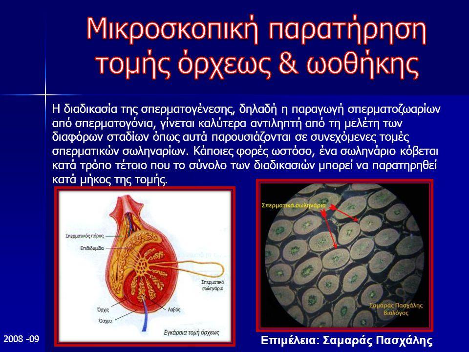 Επιμέλεια: Σαμαράς Πασχάλης 2008 -09 Η διαδικασία της σπερματογένεσης, δηλαδή η παραγωγή σπερματοζωαρίων από σπερματογόνια, γίνεται καλύτερα αντιληπτή από τη μελέτη των διαφόρων σταδίων όπως αυτά παρουσιάζονται σε συνεχόμενες τομές σπερματικών σωληναρίων.