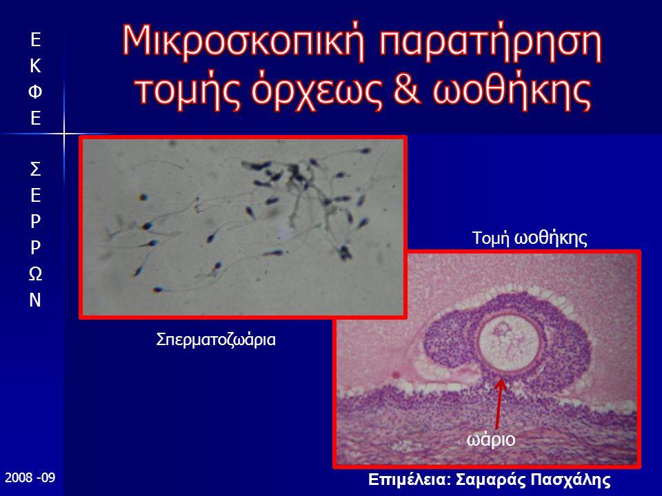 Επιμέλεια: Σαμαράς Πασχάλης 2008 -09 Τομή ωοθήκης ωάριο Σπερματοζωάρια
