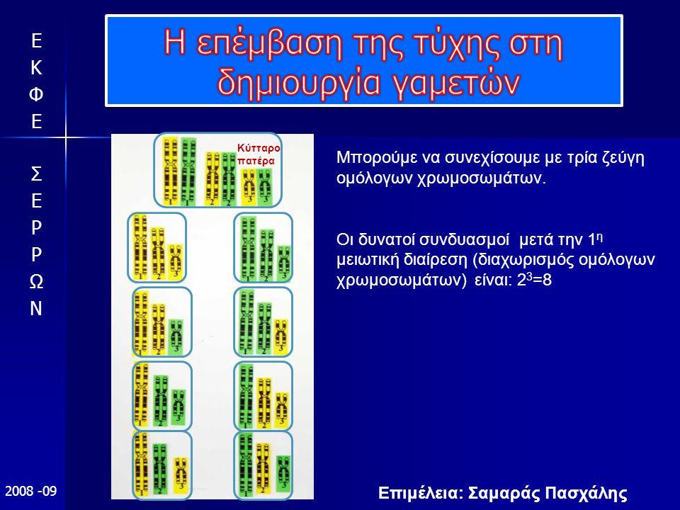 Επιμέλεια: Σαμαράς Πασχάλης 2008 -09 Μπορούμε να συνεχίσουμε με τρία ζεύγη ομόλογων χρωμοσωμάτων. Οι δυνατοί συνδυασμοί μετά την 1 η μειωτική διαίρεση