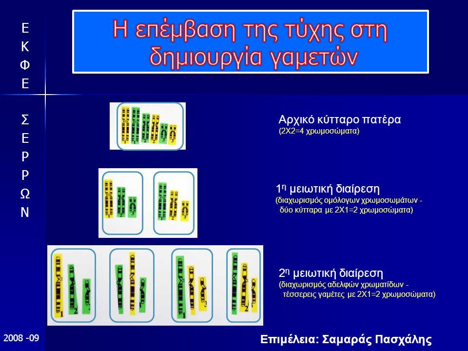 Επιμέλεια: Σαμαράς Πασχάλης 2008 -09 Αρχικό κύτταρο πατέρα (2Χ2=4 χρωμοσώματα) 1 η μειωτική διαίρεση (διαχωρισμός ομόλογων χρωμοσωμάτων - δύο κύτταρα