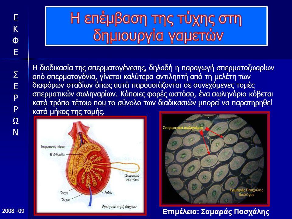 Επιμέλεια: Σαμαράς Πασχάλης 2008 -09 Η διαδικασία της σπερματογένεσης, δηλαδή η παραγωγή σπερματοζωαρίων από σπερματογόνια, γίνεται καλύτερα αντιληπτή