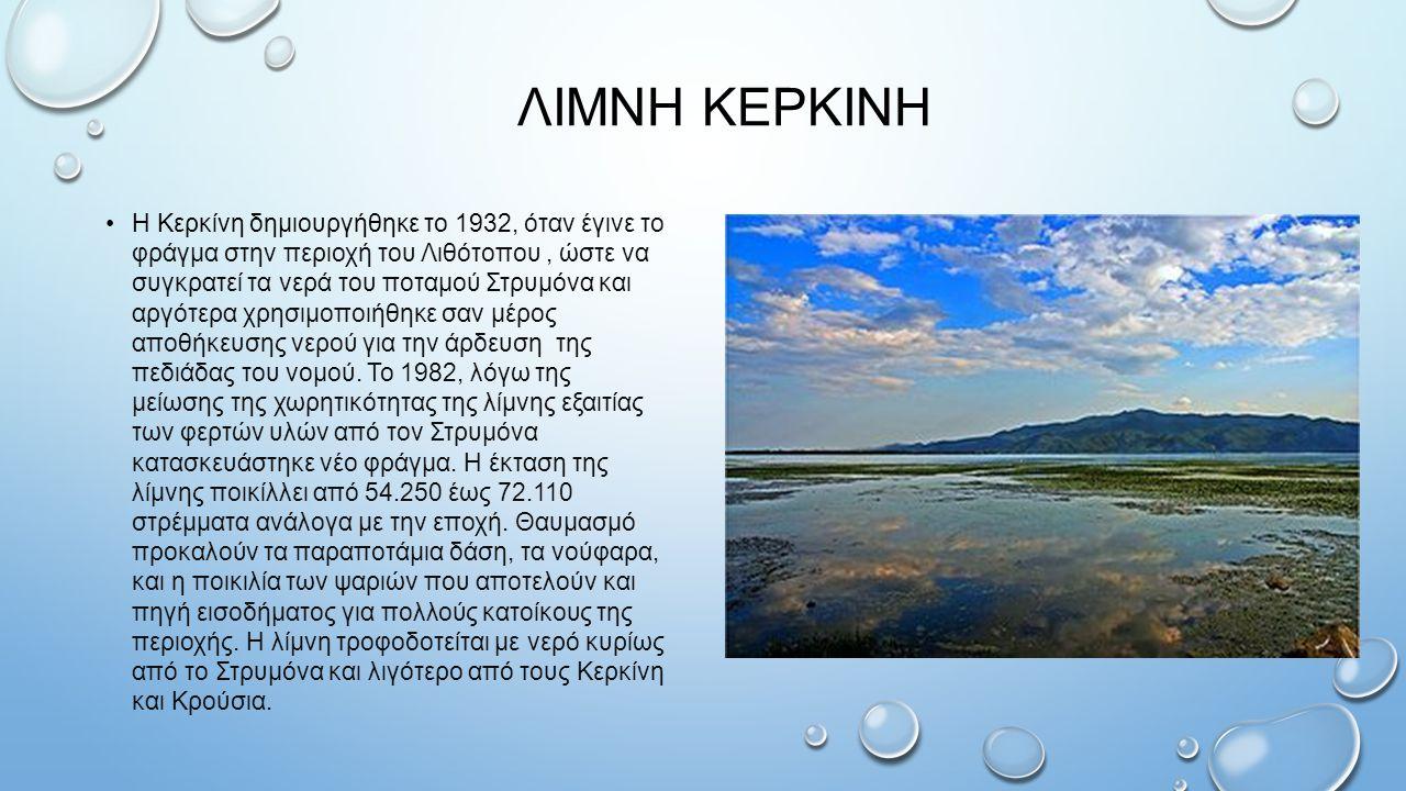 ΛΙΜΝΗ ΚΕΡΚΙΝΗ Η Κερκίνη δημιουργήθηκε το 1932, όταν έγινε το φράγμα στην περιοχή του Λιθότοπου, ώστε να συγκρατεί τα νερά του ποταμού Στρυμόνα και αργότερα χρησιμοποιήθηκε σαν μέρος αποθήκευσης νερού για την άρδευση της πεδιάδας του νομού.