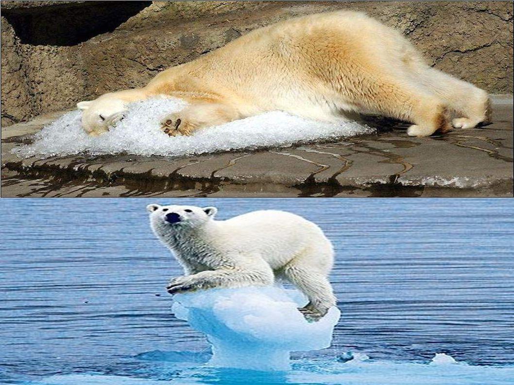 Επιπτώσεις στη φύση Το διοξείδιο του άνθρακα (CO2) αν και κύριος υπεύθυνος του φαινομένου δεν είναι ο μοναδικός.