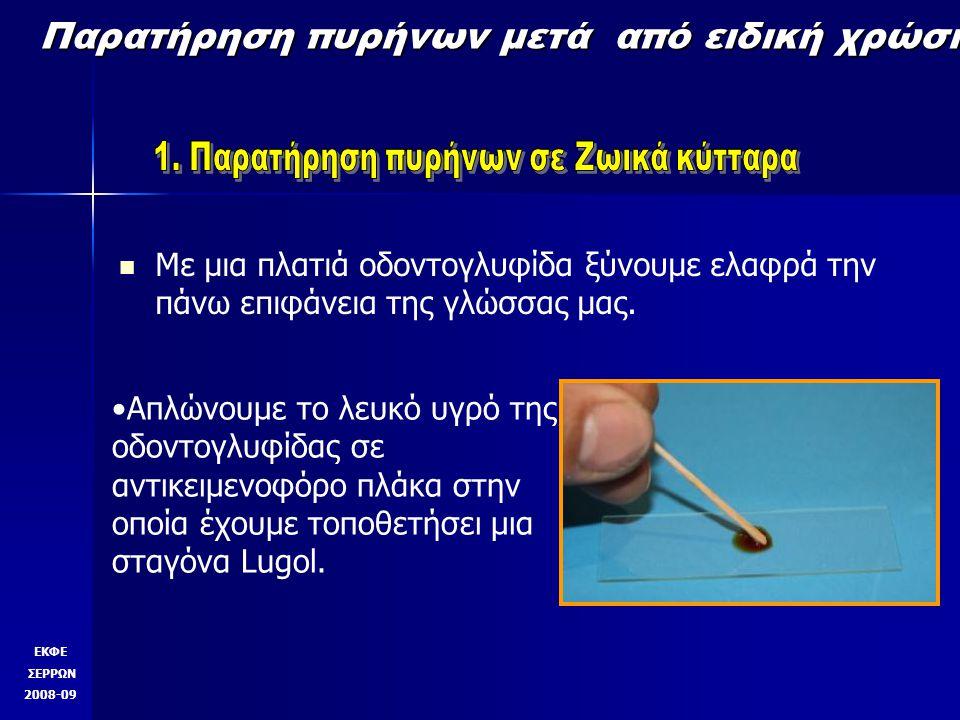 Παρατήρηση πυρήνων μετά από ειδική χρώση Με μια πλατιά οδοντογλυφίδα ξύνουμε ελαφρά την πάνω επιφάνεια της γλώσσας μας.