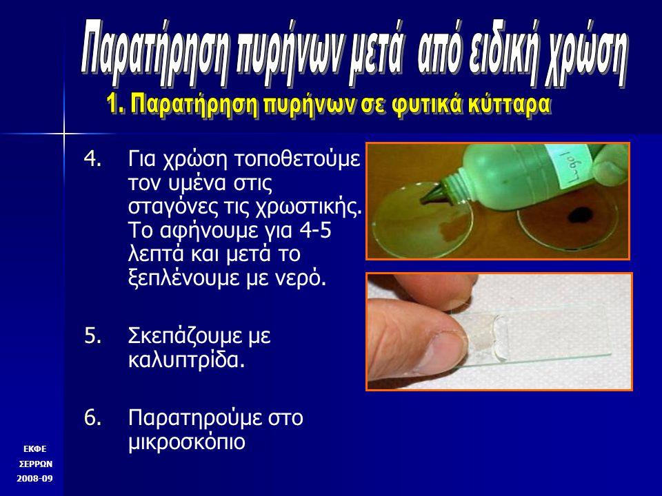4.4.Για χρώση τοποθετούμε τον υμένα στις σταγόνες τις χρωστικής.
