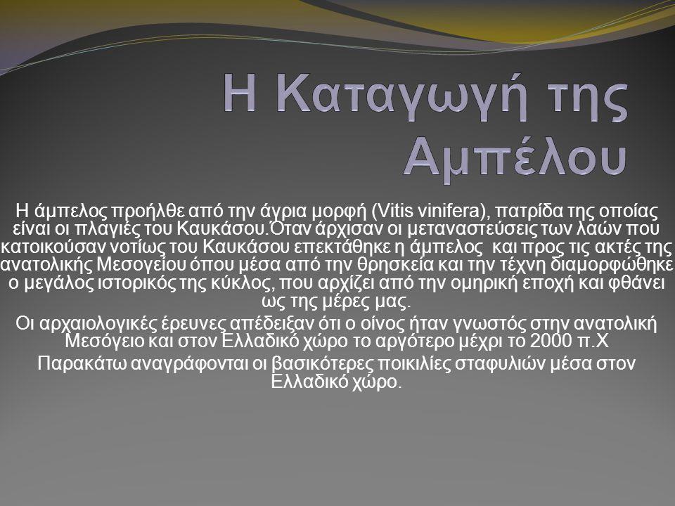 Η άμπελος προήλθε από την άγρια μορφή (Vitis vinifera), πατρίδα της οποίας είναι οι πλαγιές του Καυκάσου.Όταν άρχισαν οι μεταναστεύσεις των λαών που κ