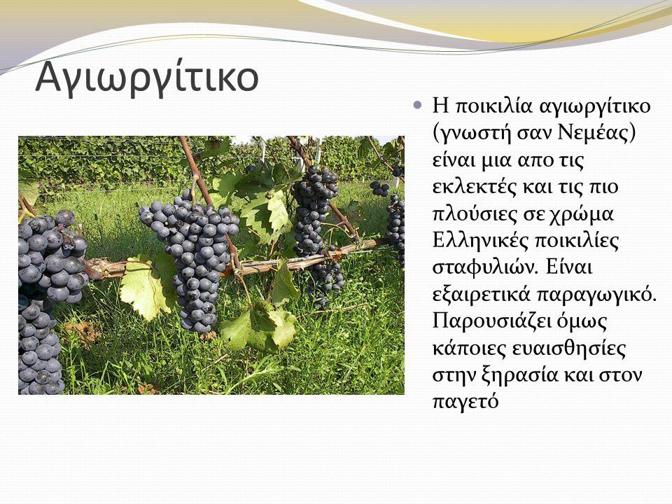 Αγιωργίτικο Η ποικιλία αγιωργίτικο (γνωστή σαν Νεμέας) είναι μια απο τις εκλεκτές και τις πιο πλούσιες σε χρώμα Ελληνικές ποικιλίες σταφυλιών. Είναι ε