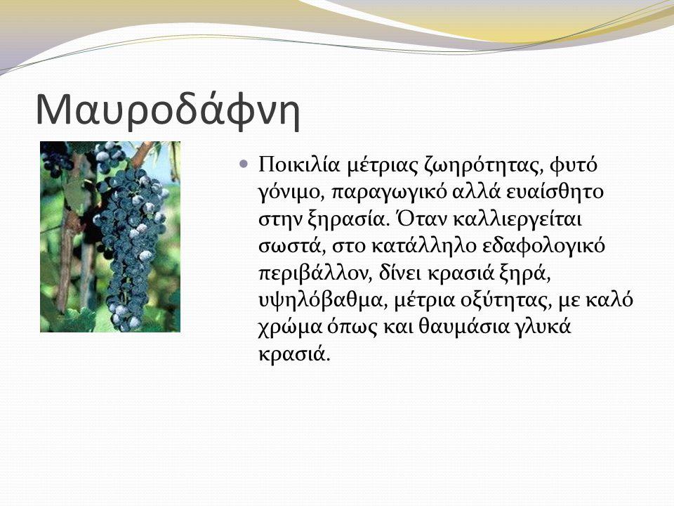 Μαυροδάφνη Ποικιλία μέτριας ζωηρότητας, φυτό γόνιμο, παραγωγικό αλλά ευαίσθητο στην ξηρασία. Όταν καλλιεργείται σωστά, στο κατάλληλο εδαφολογικό περιβ