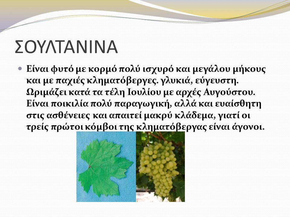 ΡΟΜΠΟΛA Η Ρομπόλα είναι μία από τις πλέον ευγενείς ελληνικές λευκές ποικιλίες με Ονομασία Προέλευσης Ανωτέρας Ποιότητας (ΟΠΑΠ).