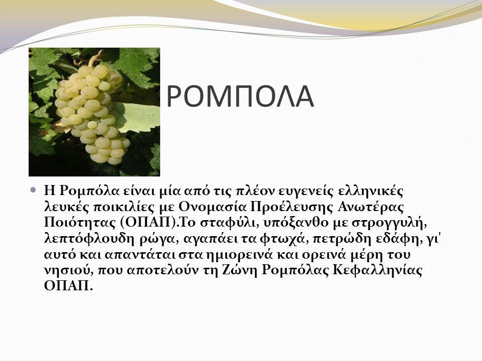 ΡΟΜΠΟΛA Η Ρομπόλα είναι μία από τις πλέον ευγενείς ελληνικές λευκές ποικιλίες με Ονομασία Προέλευσης Ανωτέρας Ποιότητας (ΟΠΑΠ). Το σταφύλι, υπόξανθο μ