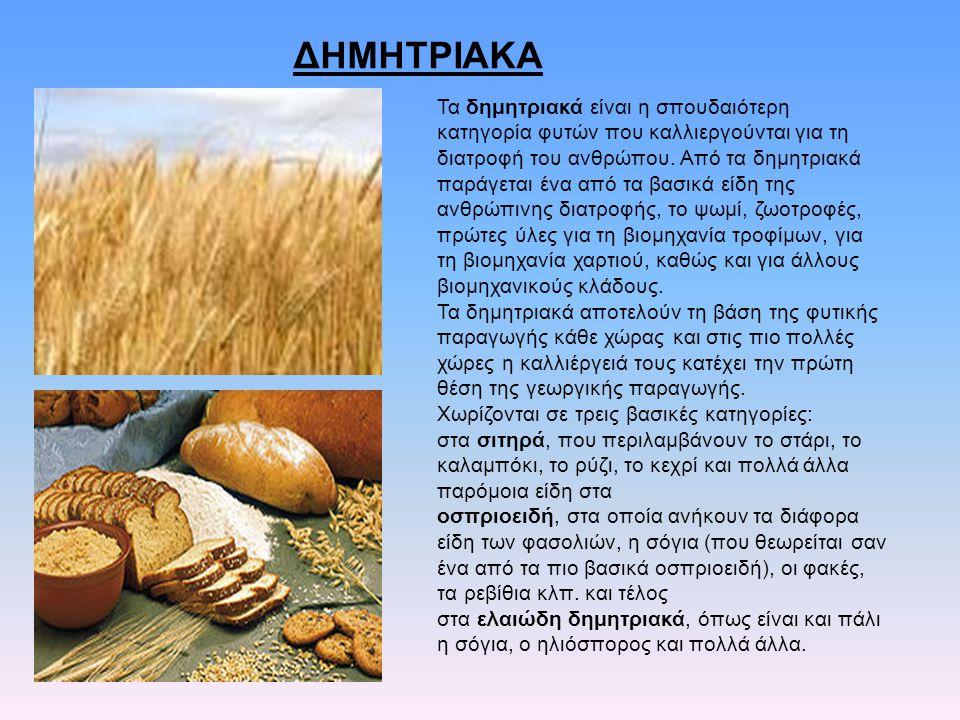 ΔΗΜΗΤΡΙΑΚΑ Τα δημητριακά είναι η σπουδαιότερη κατηγορία φυτών που καλλιεργούνται για τη διατροφή του ανθρώπου. Από τα δημητριακά παράγεται ένα από τα