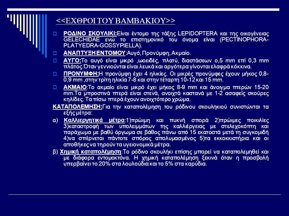 >  ΡΟΔΙΝΟ ΣΚΟΥΛΙΚΙ:Είναι έντομο της τάξης LEPIDOPTERA και της οικογένειας GELECHIDAE ενώ το επιστημονικό του όνομα είναι (PECTINOPHORA- PLATYEDRA-GOS