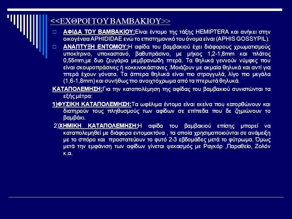 >  ΑΦΙΔΑ ΤΟΥ ΒΑΜΒΑΚΙΟΥ:Είναι έντομο της τάξης HEMIPTERA και ανήκει στην οικογένεια APHIDIDAE ενώ το επιστημονικό του όνομα είναι (APHIS GOSSYPIL). 