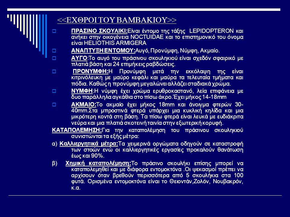>  ΠΡΑΣΙΝΟ ΣΚΟΥΛΙΚΙ:Είναι έντομο της τάξης LEPIDOPTERON και ανήκει στην οικογένεια NOCTUIDAE και το επιστημονικό του όνομα είναι HELIOTHIS ARMIGERA 