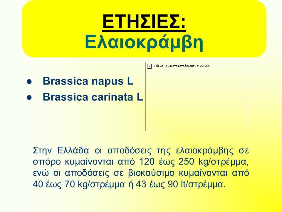 ΕΤΗΣΙΕΣ: Ελαιοκράμβη Brassica napus L Brassica carinata L Στην Ελλάδα οι αποδόσεις της ελαιοκράμβης σε σπόρο κυμαίνονται από 120 έως 250 kg/στρέμμα, ενώ οι αποδόσεις σε βιοκαύσιμο κυμαίνονται από 40 έως 70 kg/στρέμμα ή 43 έως 90 lt/στρέμμα.