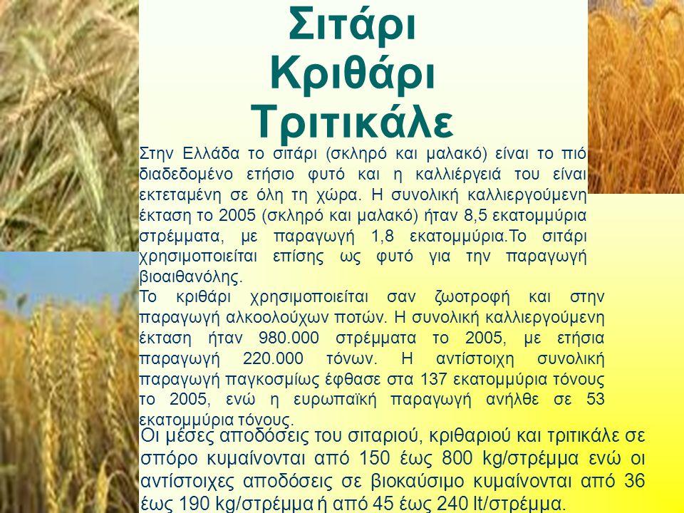 Σιτάρι Κριθάρι Τριτικάλε Στην Ελλάδα το σιτάρι (σκληρό και μαλακό) είναι το πιό διαδεδομένο ετήσιο φυτό και η καλλιέργειά του είναι εκτεταμένη σε όλη τη χώρα.