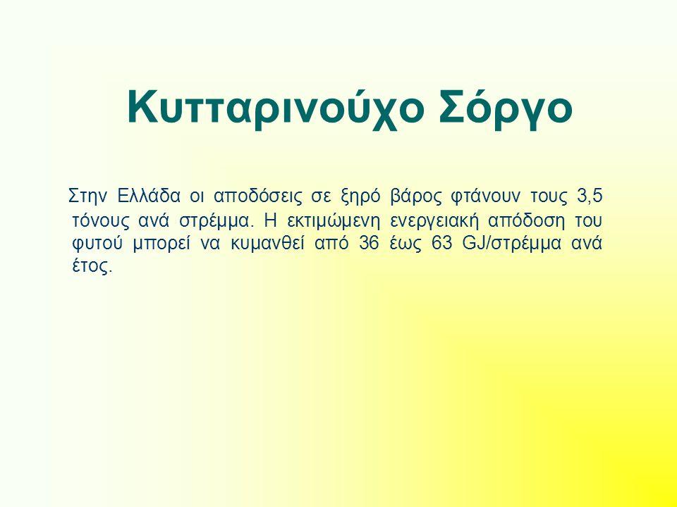 Κυτταρινούχο Σόργο Στην Ελλάδα οι αποδόσεις σε ξηρό βάρος φτάνουν τους 3,5 τόνους ανά στρέμμα. Η εκτιμώμενη ενεργειακή απόδοση του φυτού μπορεί να κυμ