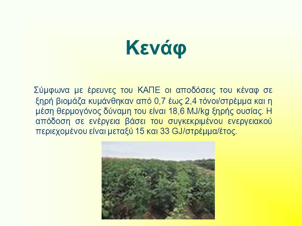 Κενάφ Σύμφωνα με έρευνες του ΚΑΠΕ οι αποδόσεις του κέναφ σε ξηρή βιομάζα κυμάνθηκαν από 0,7 έως 2,4 τόνοι/στρέμμα και η μέση θερμογόνος δύναμη του είν