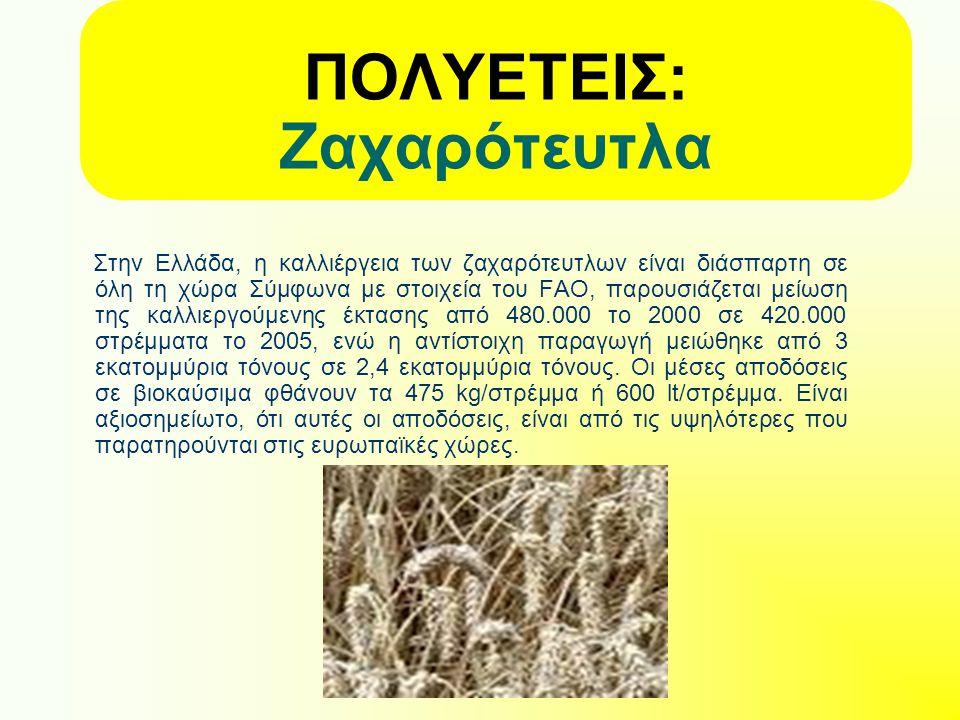 ΠΟΛΥΕΤΕΙΣ: Ζαχαρότευτλα Στην Ελλάδα, η καλλιέργεια των ζαχαρότευτλων είναι διάσπαρτη σε όλη τη χώρα Σύμφωνα με στοιχεία του FAO, παρουσιάζεται μείωση