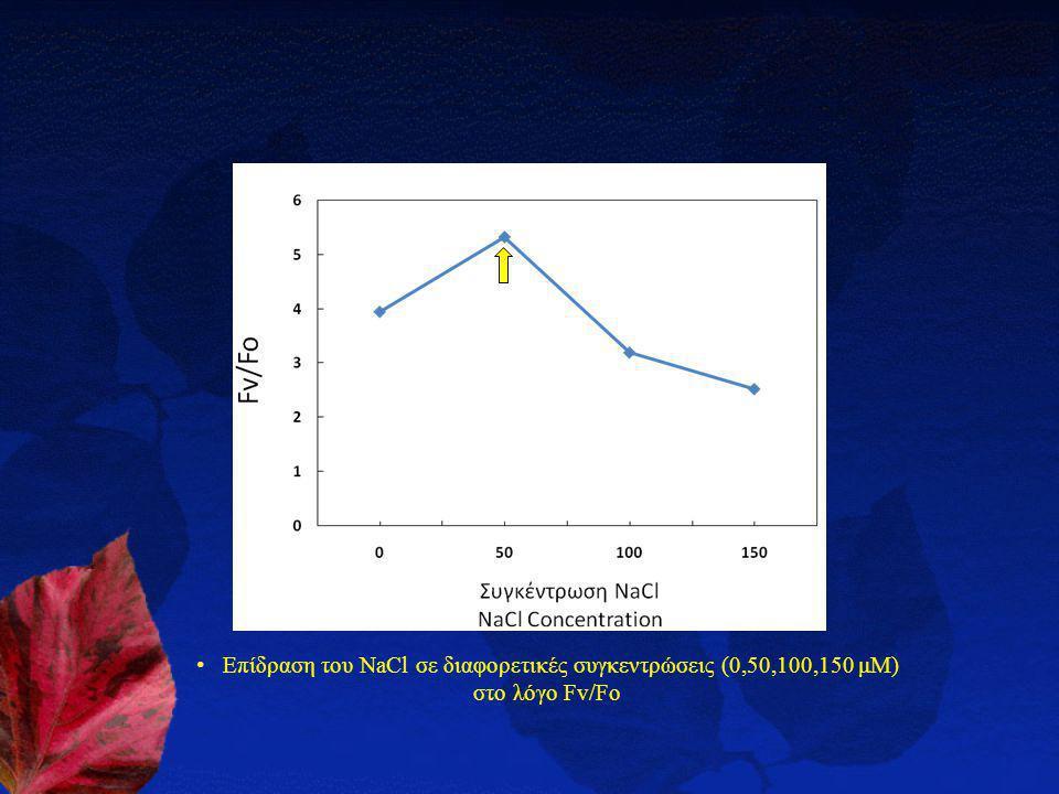 Επίδραση του NaCl σε διαφορετικές συγκεντρώσεις (0,50,100,150 μΜ) στο λόγο Fv/Fo