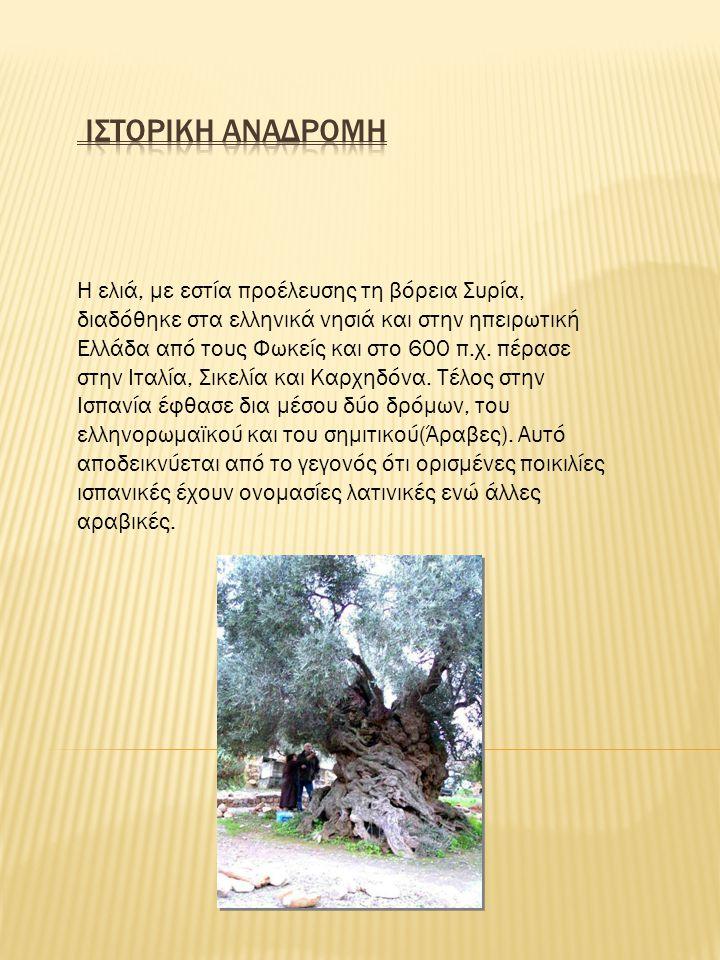 Η ελιά, με εστία προέλευσης τη βόρεια Συρία, διαδόθηκε στα ελληνικά νησιά και στην ηπειρωτική Ελλάδα από τους Φωκείς και στο 600 π.χ. πέρασε στην Ιταλ