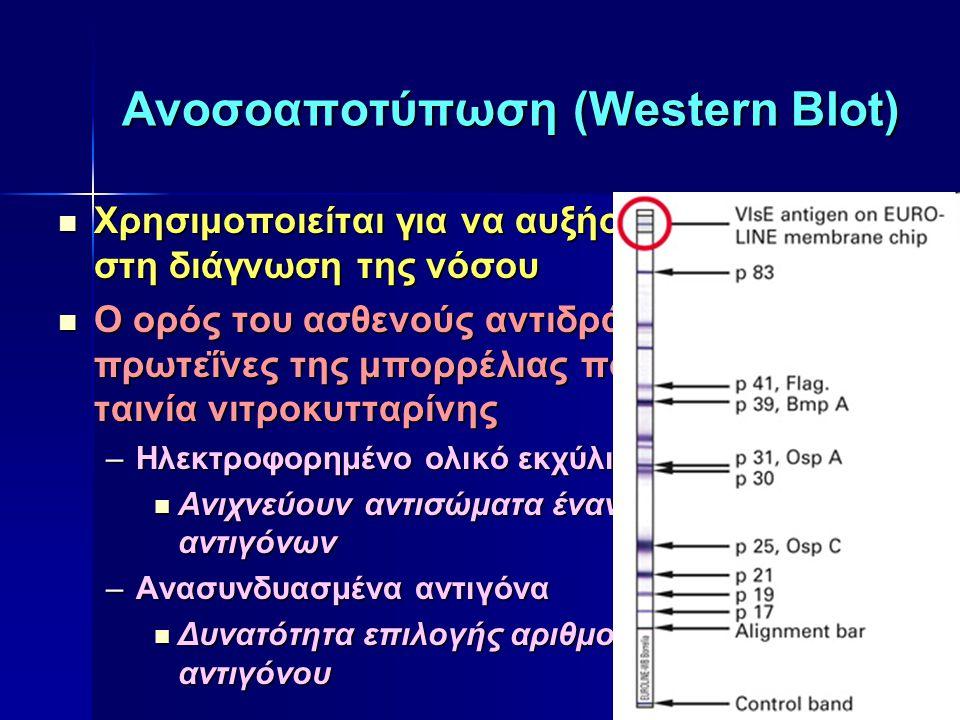 Ανοσοαποτύπωση (Western Blot) Χρησιμοποιείται για να αυξήσει την ειδικότητα στη διάγνωση της νόσου Χρησιμοποιείται για να αυξήσει την ειδικότητα στη δ