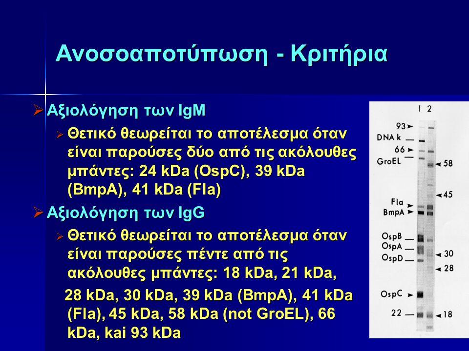 Ανοσοαποτύπωση - Κριτήρια  Αξιολόγηση των IgM  Θετικό θεωρείται το αποτέλεσμα όταν είναι παρούσες δύο από τις ακόλουθες μπάντες: 24 kDa (OspC), 39 k